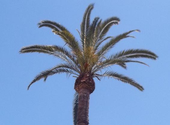 Raus aus der Kälte – Weihnachten unter Palmen